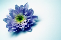 our funeral planning service in Sudbury blue flower